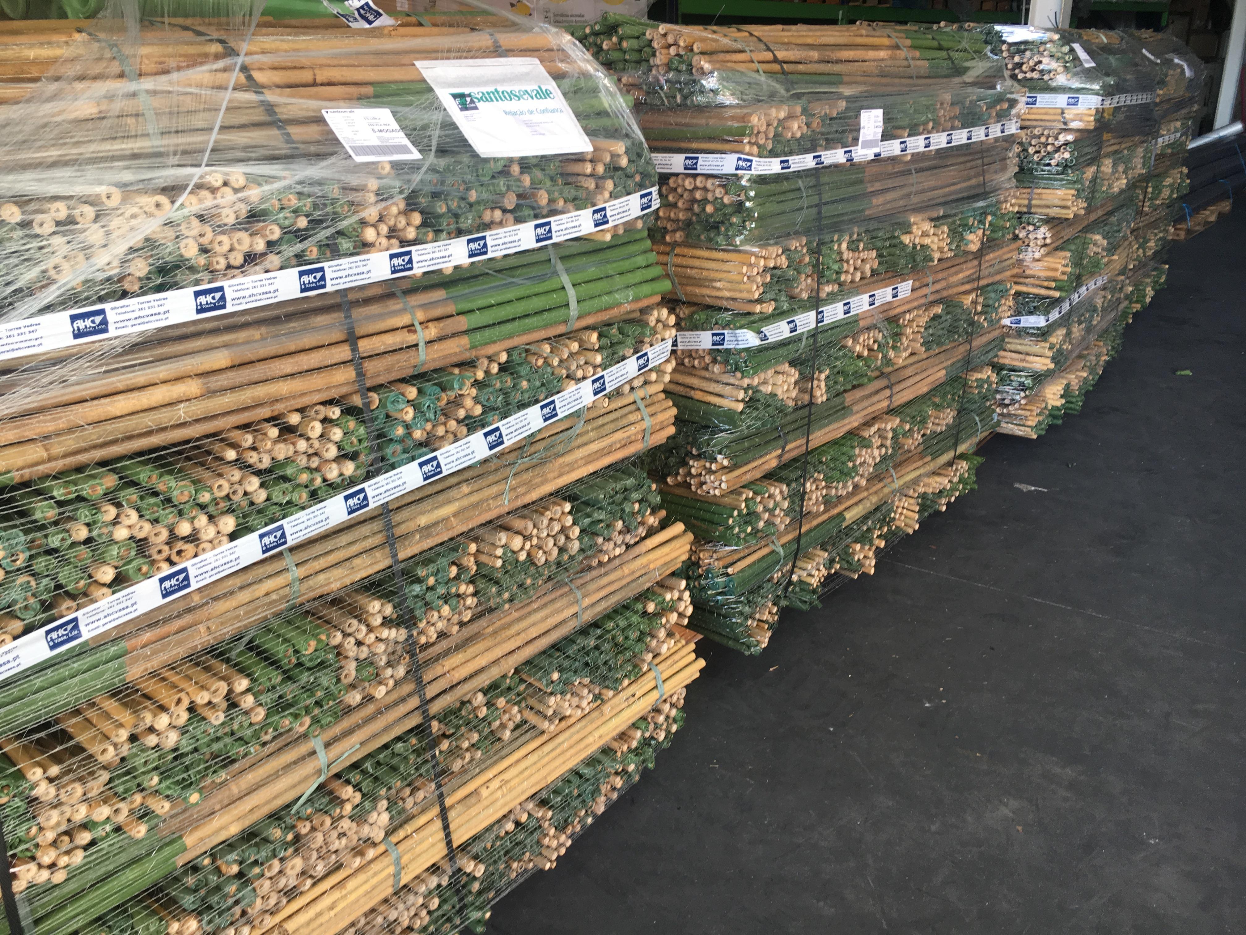 Bambu 150 cm